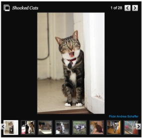 cat-slideshow
